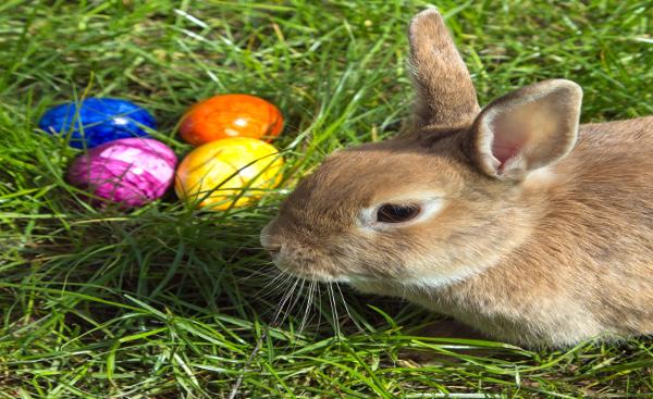 Easterbunny_resized