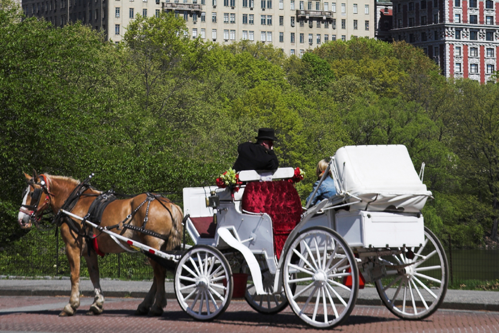Central Park Horse and Carriage Rides