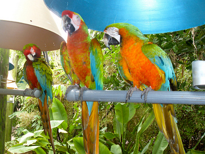 #new#Jungle Island Coupons