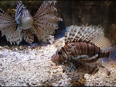 20 off top uk attractions and restaurants smartsave for Discount aquarium fish and reef