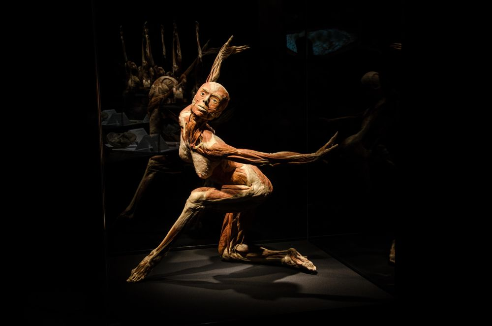 Body Worlds: Pulse - Discovery Times Square